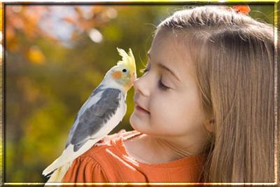 Попугай для ребенка