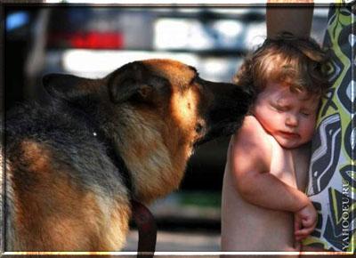 Ребенок боится собак